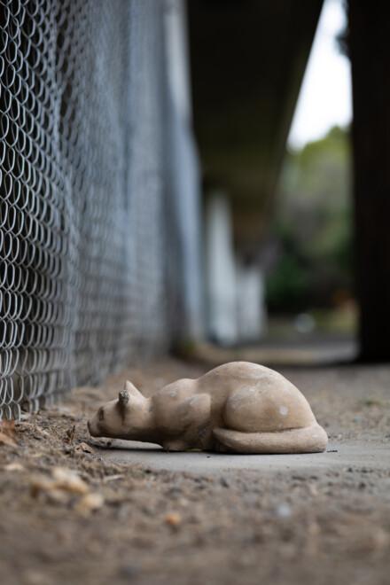 Stone Cat Project